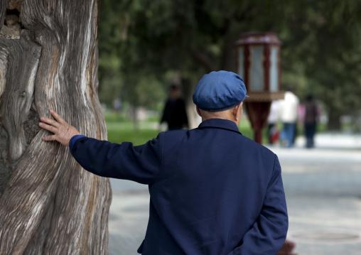 Chinese Man Touching An Old Tree, Beijing China