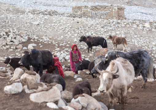 Wakhi nomad women with their yaks, Big pamir, Wakhan, Afghanistan