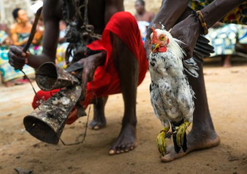 Benin, West Africa, Bopa, chicken sacrified by dah tofa voodoo master