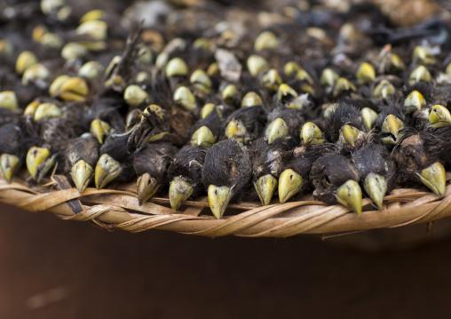 Benin, West Africa, Bonhicon, dead birds sold on a voodoo market