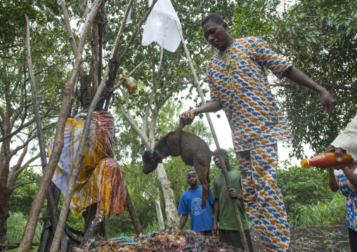 Benin, West Africa, Dankoly, a priest sacrifies a goat during a voodoo ceremony
