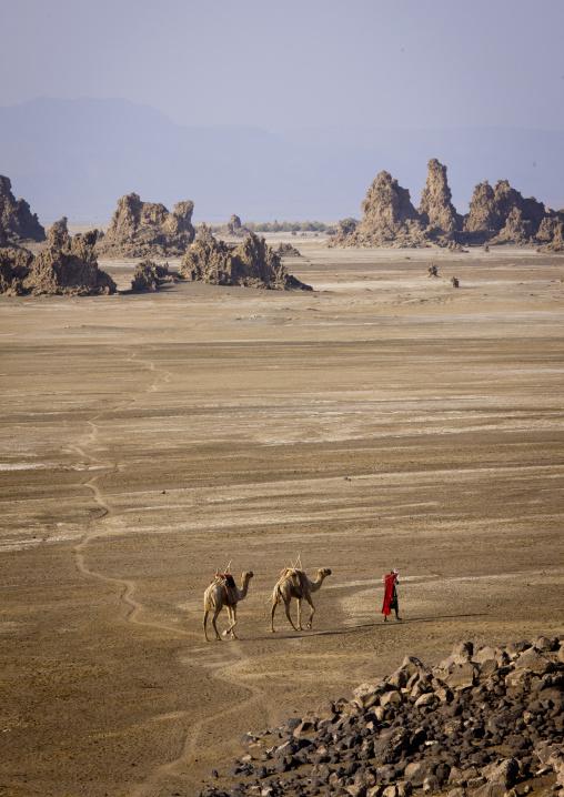 Afar Man And His Camels, Lake Abbe, Djibouti