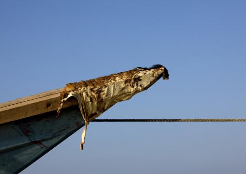 Gaot Skin On A Boat To Bring Luck, Gorodia, Djibouti