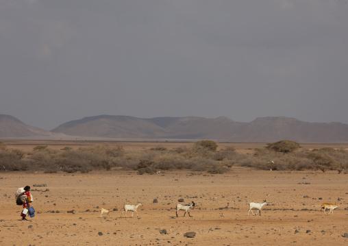 Afar Woman Waliking In The Desert, Obock, Djibouti