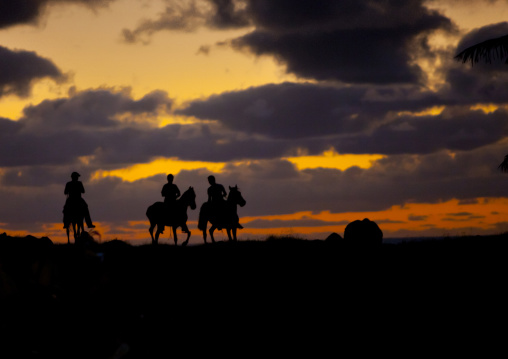 Horses In The Sunset, Easter Island, Chile