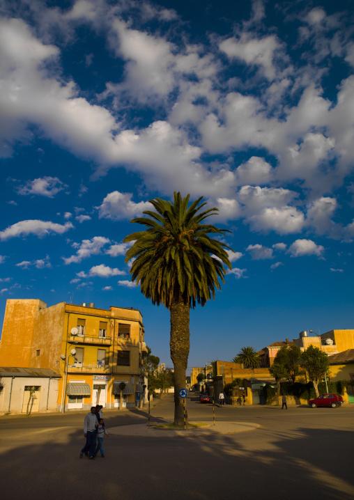 Palm On A Square In Asmara, Eritrea