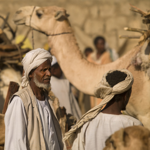 Monday Camel Market In Keren, Eritrea