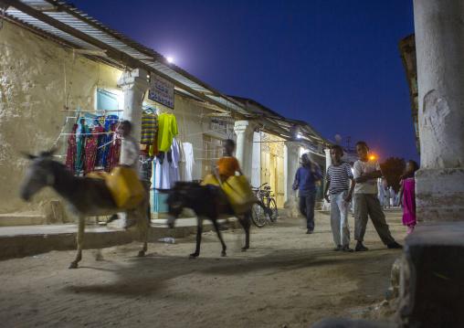 Donkeys In Monday Market At Night, Anseba, Keren, Eritrea