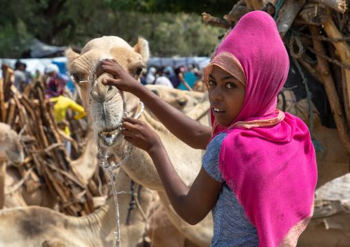 Eritrean woman taking care of a camel bringing wood in the monday market, Semien-Keih-Bahri, Keren, Eritrea
