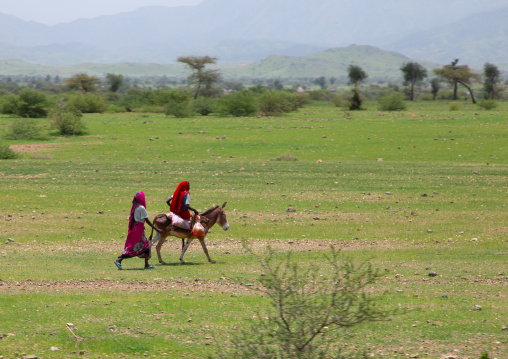 Eritrean women with a donkey in a field, Gash-Barka, Barentu, Eritrea