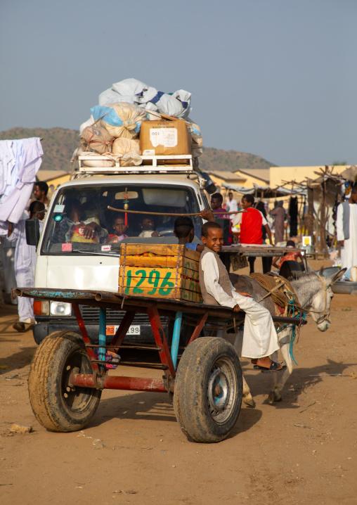 Eritrean boy going to the market on a cart, Gash-Barka, Agordat, Eritrea