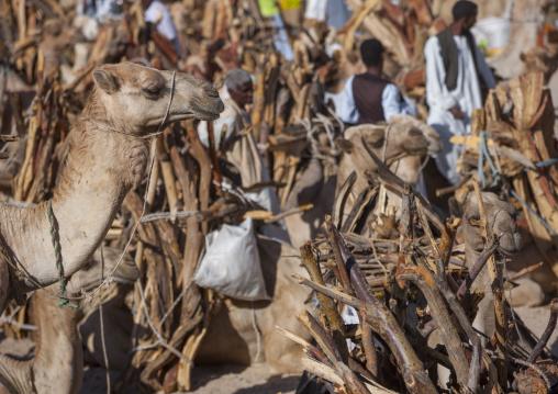 Monday Camel Market, Anseba, Keren, Eritrea