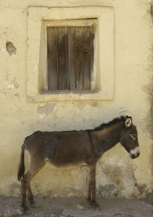 Donkey In Senafe Market, Eritrea