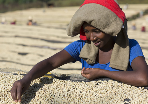 Worker In Front Of White Coffee Beans Drying In The Sun In A Fair Trade Coffee Farm, Jimma, Ethiopia