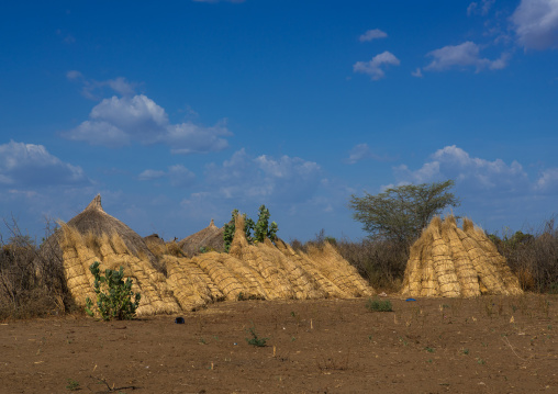 Straws to build the roofs in traditional nyangatom and toposa tribes village, Omo valley, Kangate, Ethiopia