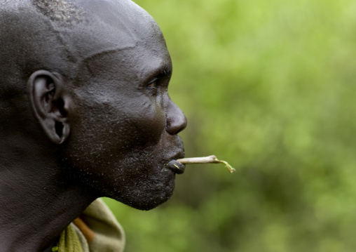 Portrait Of A Mursi Tribe Man Chewing A Gima Stick, Omo Valley, Ethiopia