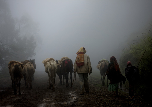 Dorze tribe people and their horses walking in the fog, Chencha, Ethiopia
