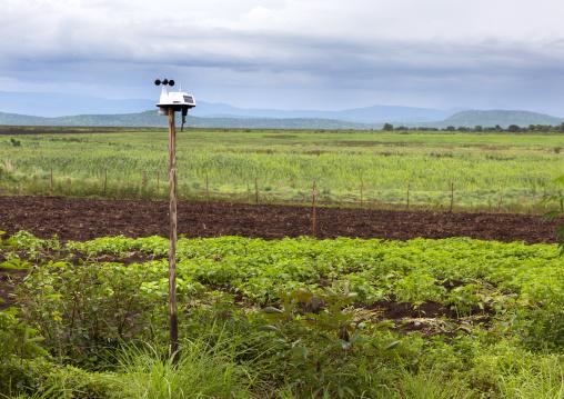 Plantation, Koka, Omo valley, Ethiopia