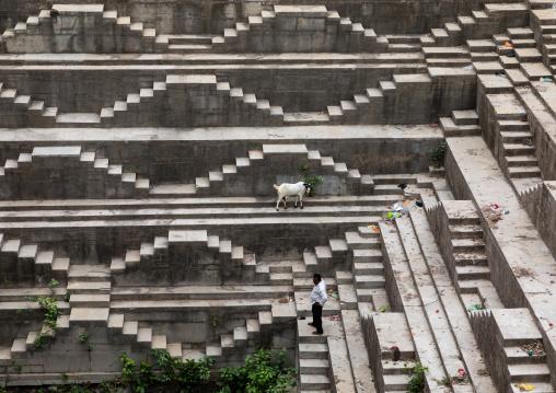 Indian man with his goat in dhabhai ka Kund stepwell, Rajasthan, Bundi, India