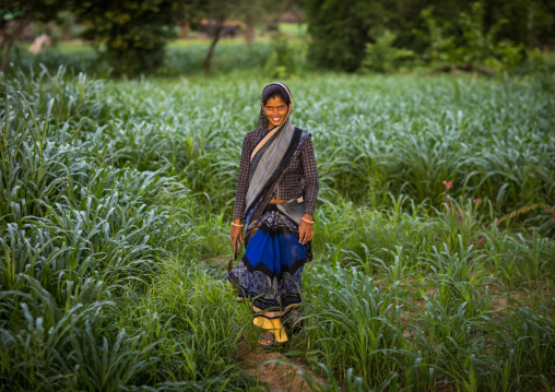 Portrait of a rajasthani woman in traditional sari in a field, Rajasthan, Baswa, India