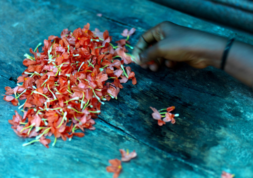 Hand Digging In A Pile Of Cut Flowers At The Flower Market, Pondicherry, India