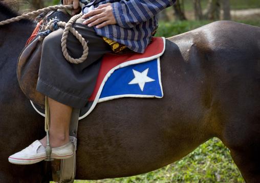 Horse in java island indonesia