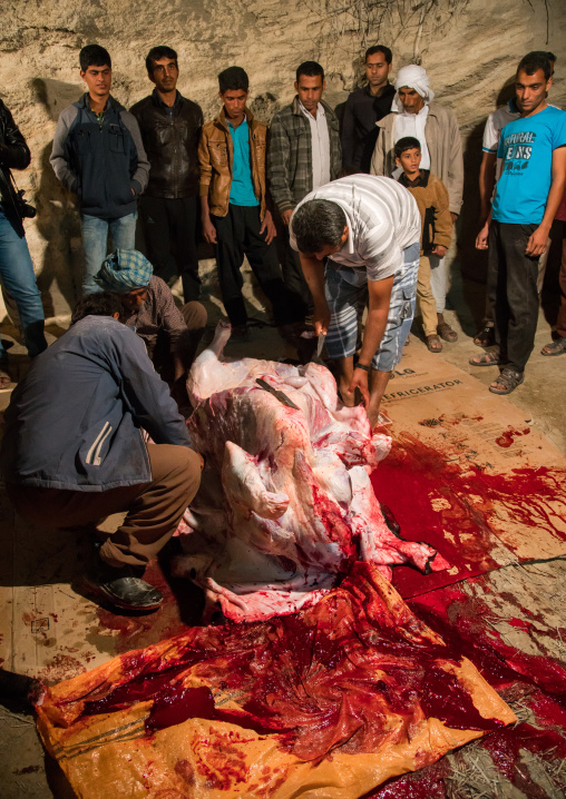 Slaughter of a bull during a wedding, Qeshm island, Tabl , Iran