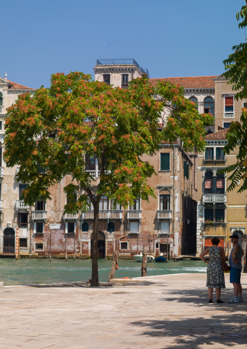Square with a big tree, Veneto Region, Venice, Italy