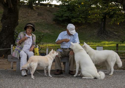 Japanese couple feeding dogs in a park, Hypgo Prefecture, Himeji, Japan