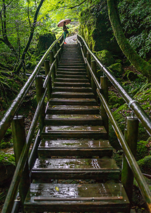 Tourist at the top of a wooden stair in Yakusugi land, Kagoshima Prefecture, Yakushima, Japan