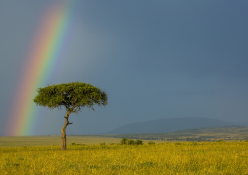 Rainbow after rainstorm, Rift valley province, Maasai mara, Kenya