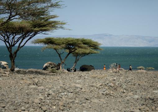 Turkana tribe huts standing under acacias, Rift Valley Province, Turkana lake, Kenya