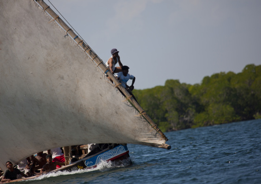 Steerage of dhow during the dhow race , Maulidi festival, Lamu, Kenya