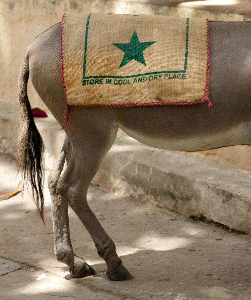 Donkey in lamu town - kenya