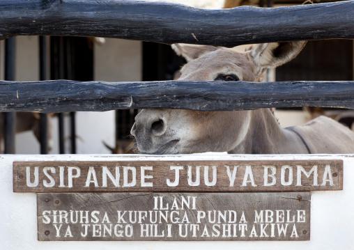 The donkeys hospital, One donkey, Lamu, Kenya