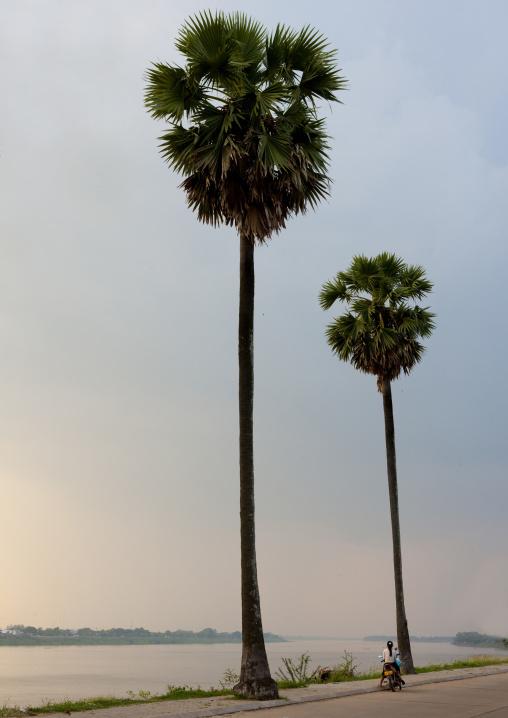Palm trees on mekong river, Thakhek, Laos