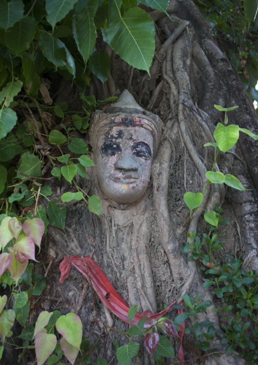 Buddha statue made in a tree, Savannakhet, Laos