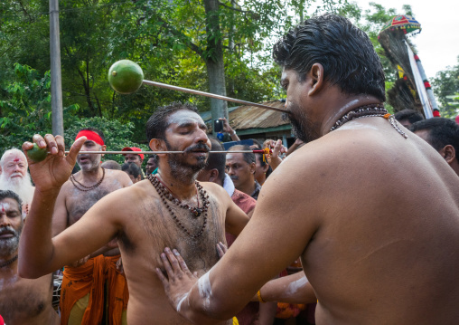 A Devotee Cheek Is Pierced With A Skewer By A Priest At Thaipusam Hindu Festival At Batu Caves, Southeast Asia, Kuala Lumpur, Malaysia