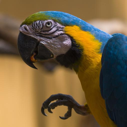 Parrot Head, Langkawi, Malaysia
