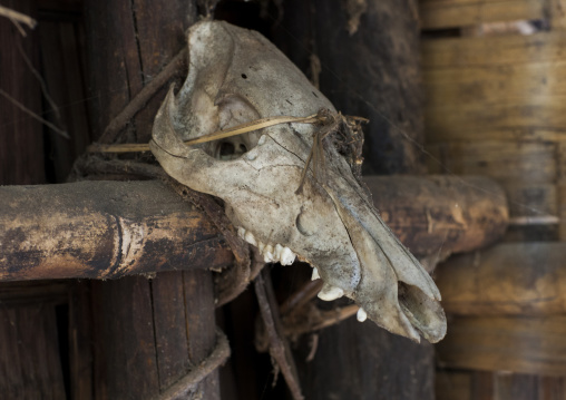 Animal Skull In Front Of A House, Mindat, Myanmar