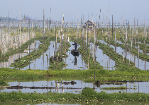 Floating gardens, Inle lake, Myanmar