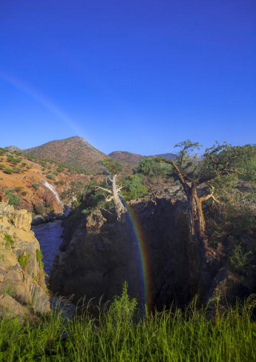 Baobab On River Kunene And The Epupa Waterfalls, Namibia