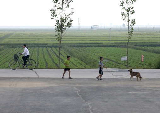 Children playing with their dog on a road in the countryside, Kangwon Province, Chonsam Cooperative Farm, North Korea