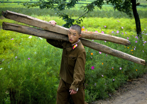 Young North Korean soldier carrying wood in the countryside, North Hwanghae Province, Kaesong, North Korea