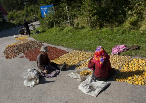 Two North Korean women drying mushrooms on the road, Ryanggang Province, Samjiyon, North Korea