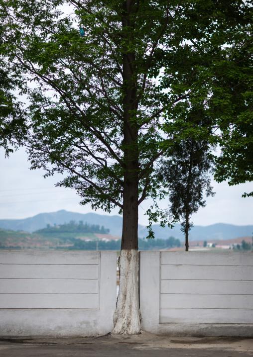 Wall broken to let a tree grow, South Pyongan Province, Nampo, North Korea