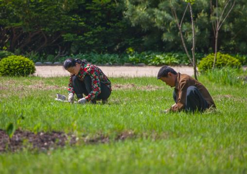 North Korean farmers working in a field, North Pyongan Province, Myohyang-san, North Korea
