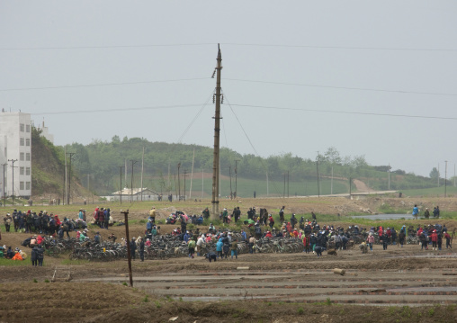 North Korean citizens gathering for collective works in a field, South Pyongan Province, Nampo, North Korea