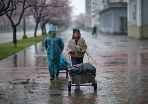 North Korean woman pulling heavy trolleys under the rain, Pyongan Province, Pyongyang, North Korea
