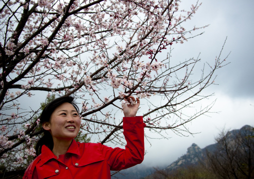 North Korean woman with cherry blossoms, Ogwansan, Ryongthong Valley, North Korea
